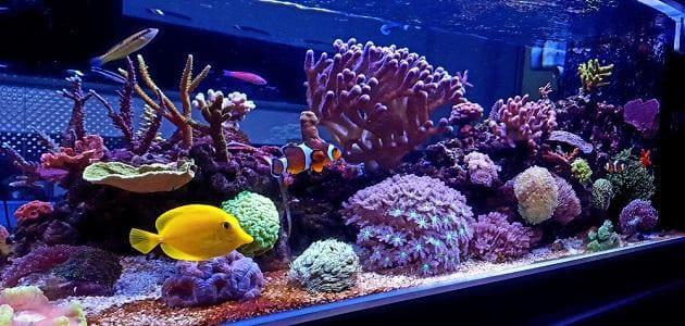 The way for your saltwater aquarium setup