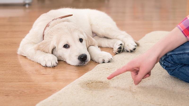 Βάζετε τον σκύλο σας τιμωρία;