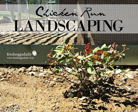 Landscaping our New Chicken Run
