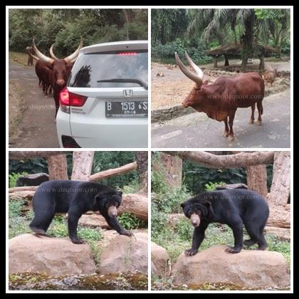 Taman Safari Indonesia 6