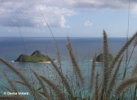 Grasses along Pillbox Trail, Lanikai