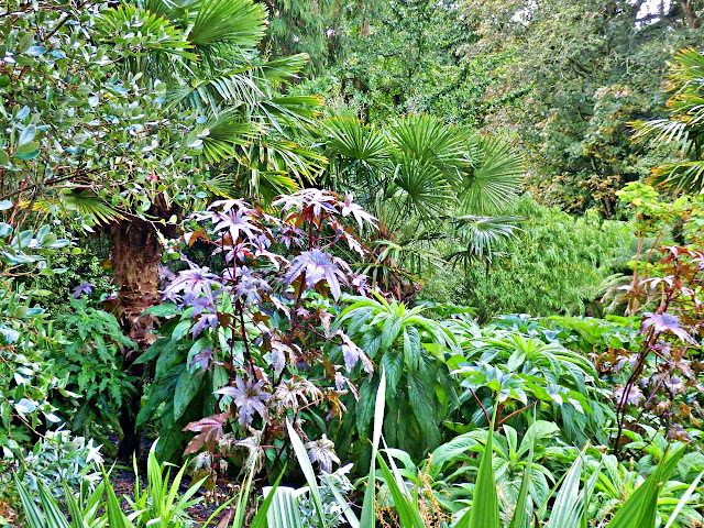 In the jungle at Lost Gardens of Heligan, Cornwall