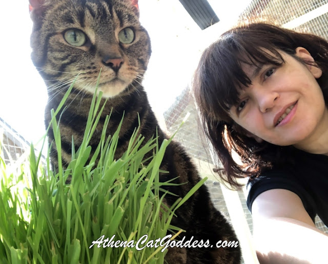 tabby cat and her human mum selfie