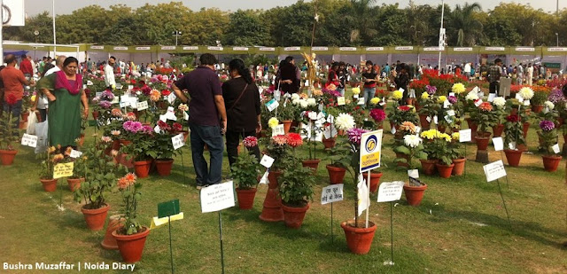 Noida Diary: Variety of Flowers on Display at 30th Noida Flower Show