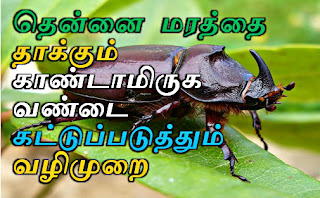 தென்னை தோப்பில் காண்டாமிருக வண்டு தடுக்க வழி, ஆமணக்கு புண்ணாக்கு கரைசல், iyarkai vivasayam, Vivasayam, Agriculture tips tamil,