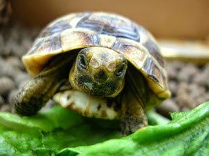 Penyakit mencret pada kura-kura