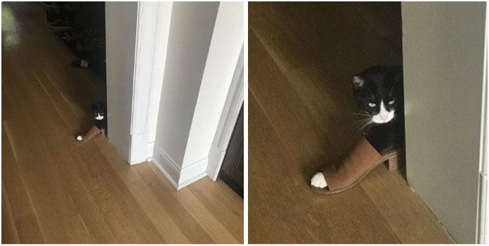 ,قطط مضحكة 2019,قطط مضحكة,قطط تجعلك تضحك ,قطط مضحكة جدا,قطط مضحك جدا