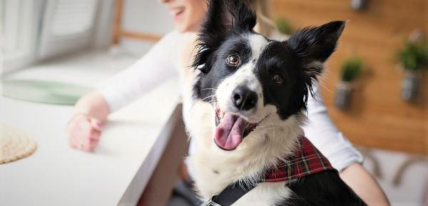 Why does my dog not want to eat? Causes and recommendation