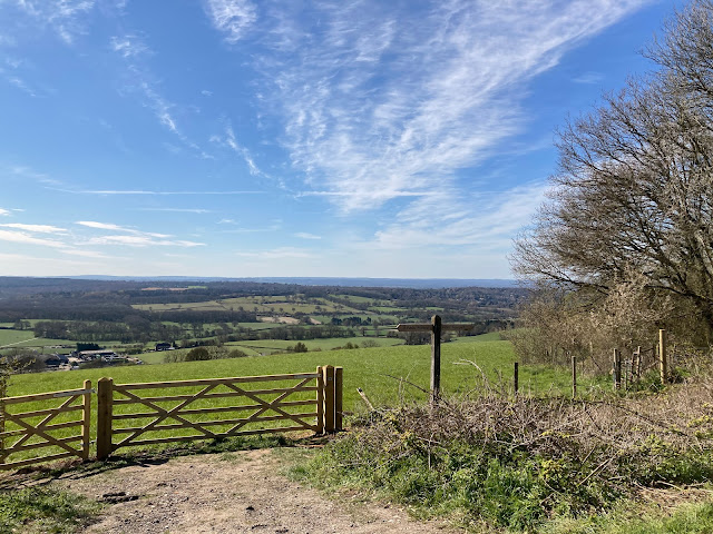 Surrey Hills view