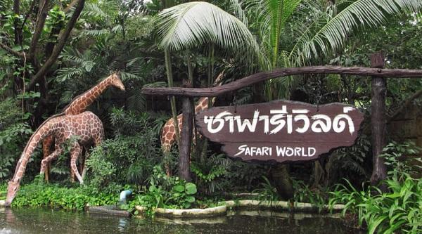 hươu cao cổ tại Safari World