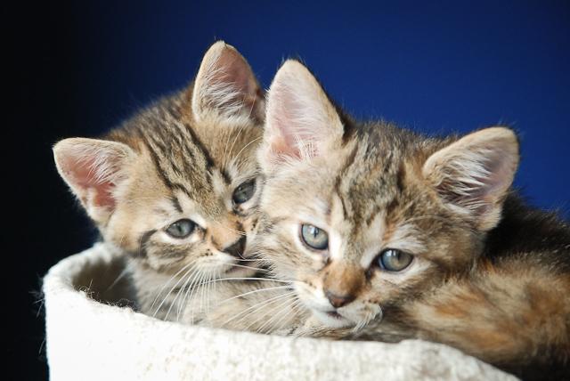 Kociaki małe