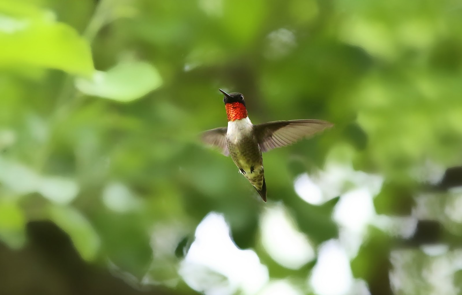 hummingbird hd wallpapers hd wallpapers iphone wallpapers