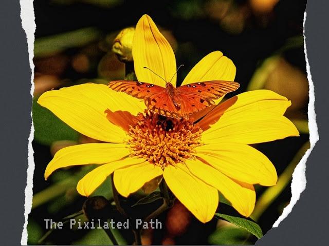 May Full Moon Butterfly Transformation Spell