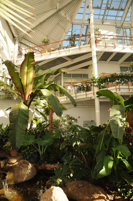 Cheyenne Botanic Gardens - interior of conservatory
