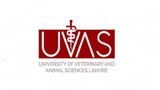 www.uvas.edu.pk - UVAS University of Veterinary and Animal Sciences Jobs 2021 in Pakistan