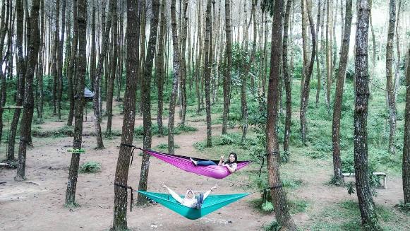 Pesona Wisata Baru - Top Selfie Hutan Pinus Kragilan Yang Indah