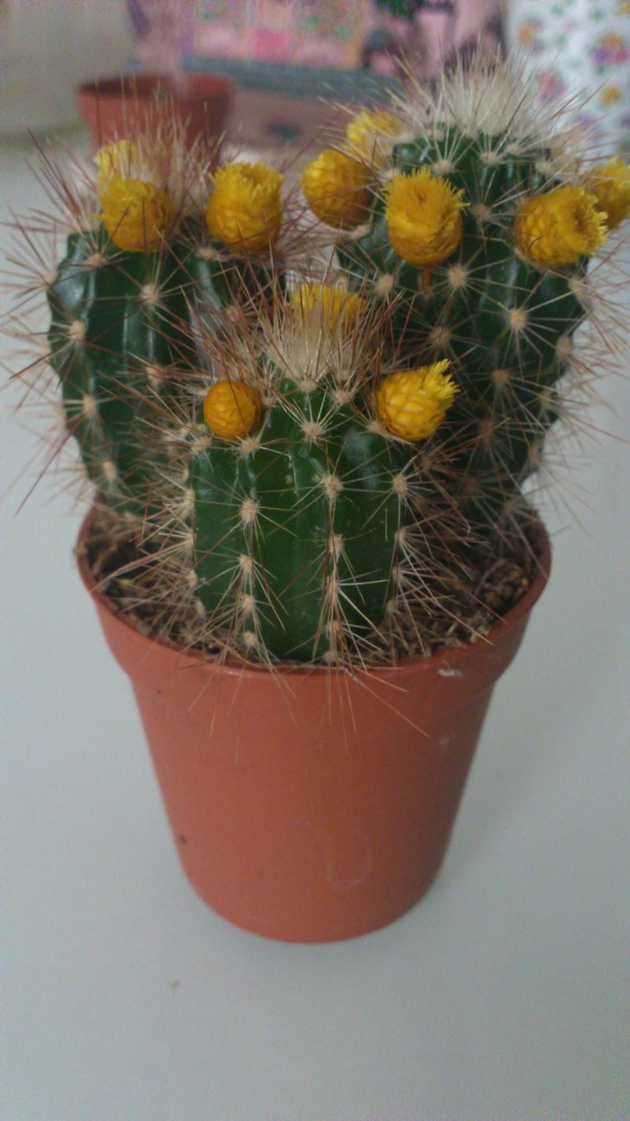 les copines végétales: parure de cactus