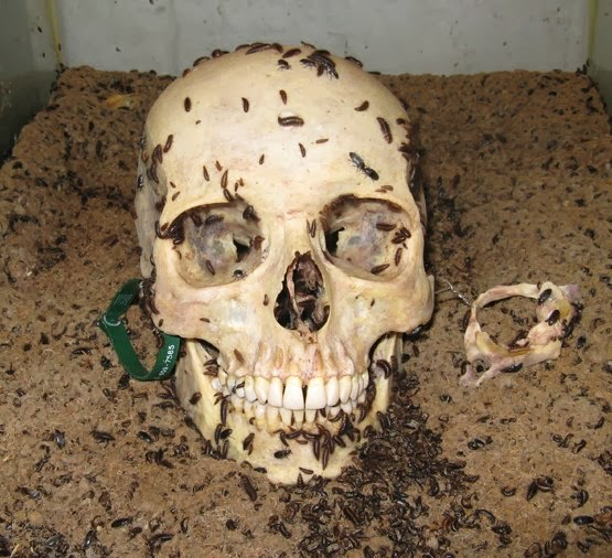 Savive's Corner: Determining Postmortem Interval: Forensic