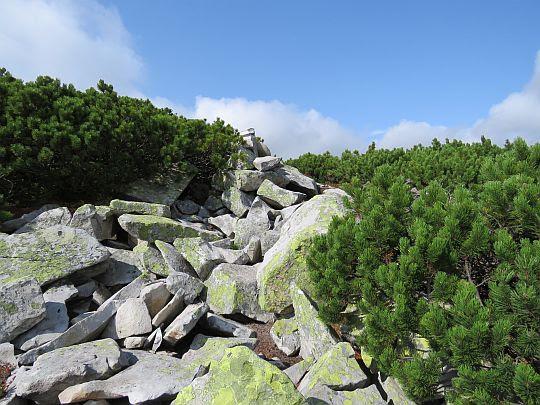Wolne przestrzenie między kosówką wypełnia rumosz skał.