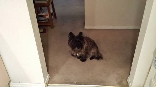 Col  Potter Cairn Rescue Network: Lost Brindle Cairn