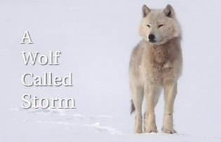 bbc online documentaries with wolf