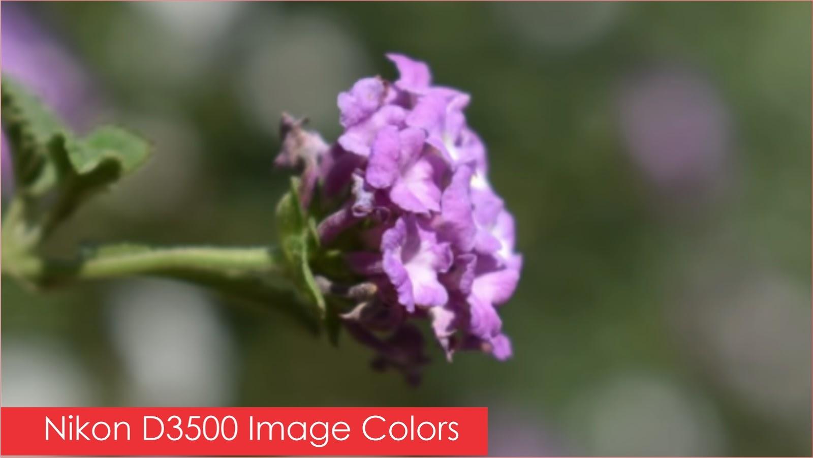 Nikon D3500 Camera Image Performance