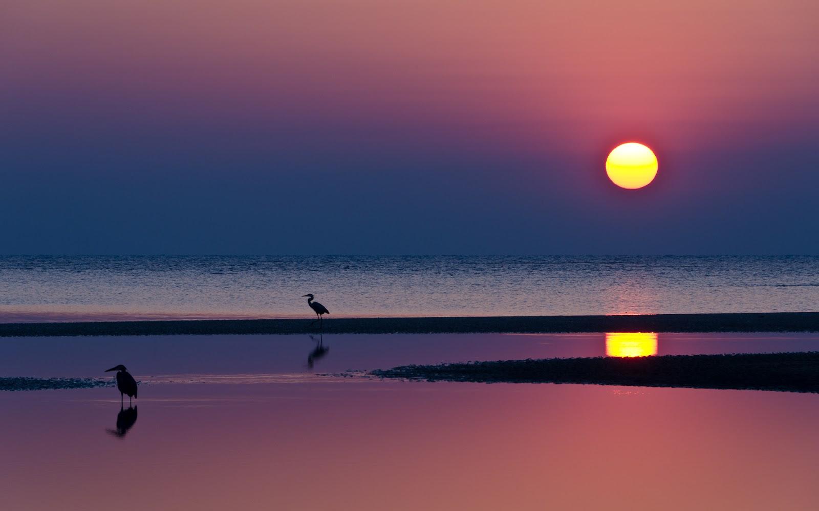 Banco de fotos hermosa puesta de sol en la playa for Puesta de sol