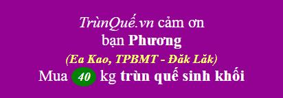 Trùn quế Ea Kao