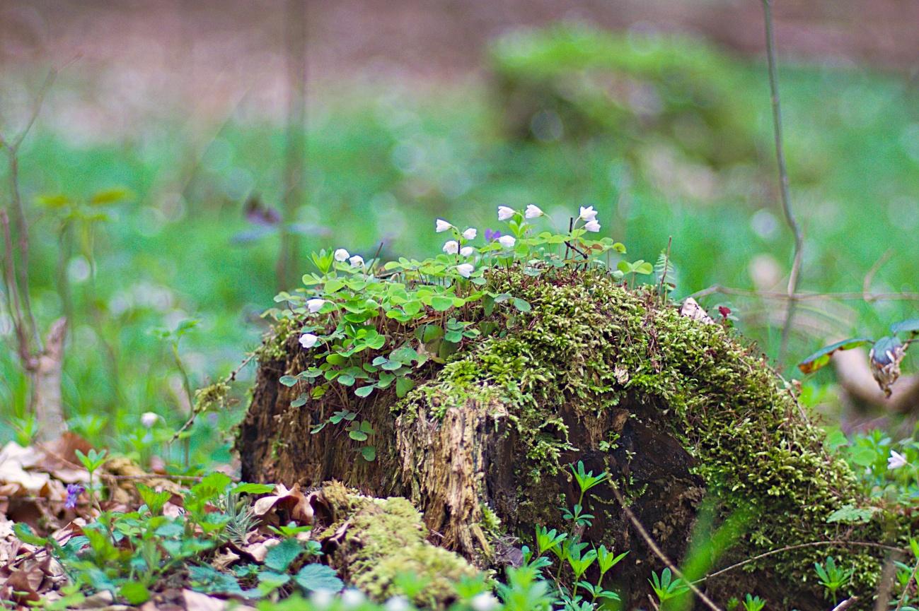 Idylle im Wald