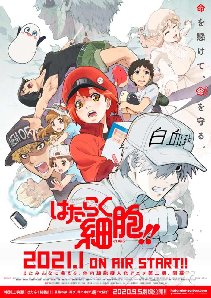 Cell at Work! (Hataraku Saibou) anime temporada 2