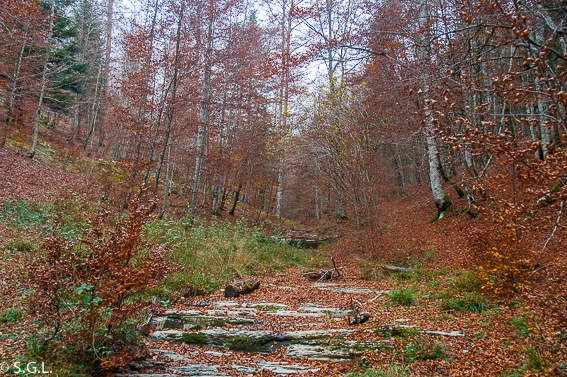 La Selva de Irati. El bosque de Zabaleta