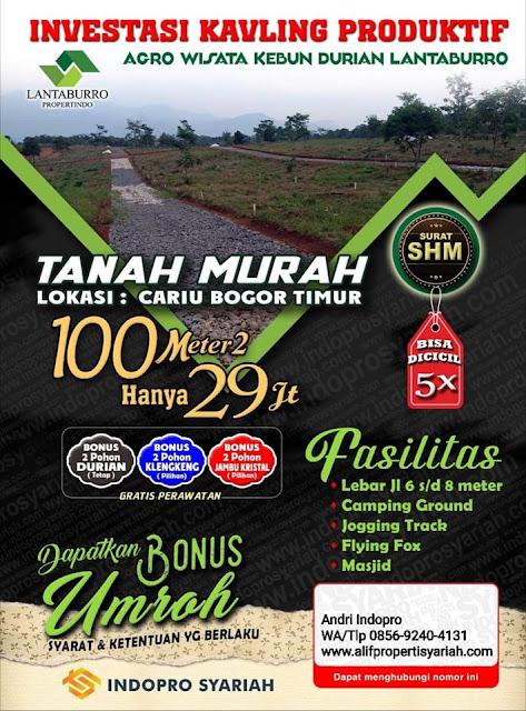 Investasi Lahan Produktif Agrowisata Kebun Durian lantaburro Tanjungsari Bogor