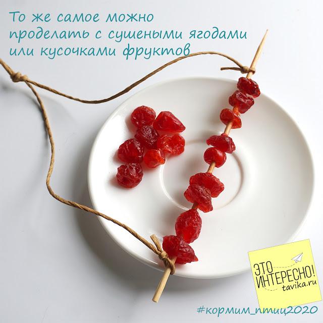 шашлычки из ягод для птиц