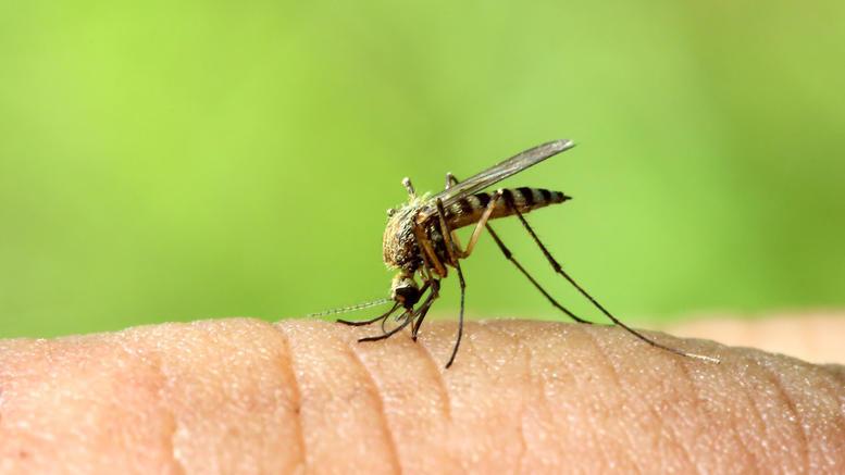 Και δεύτερο κρούσμα ιού του Δυτικού Νείλου εντοπίστηκε στη Λάρισα