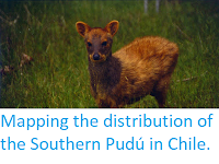 https://sciencythoughts.blogspot.com/2016/01/mapping-distribution-of-southern-pudu.html
