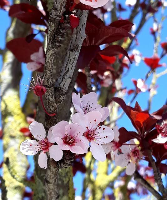 a bella e o mundo - primavera