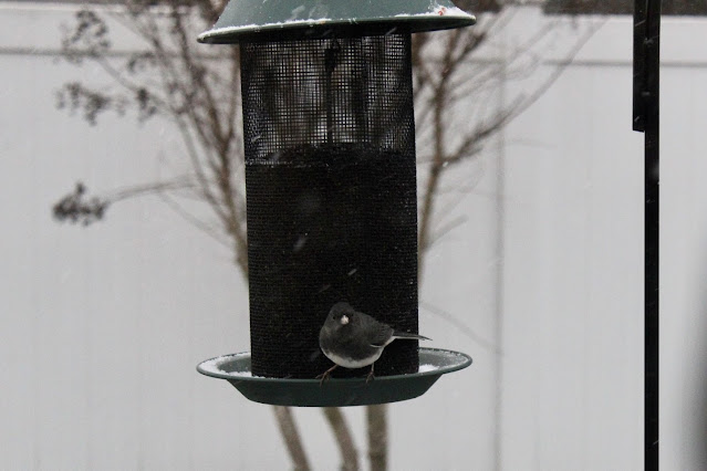 dark eyed junco nyjer seed feeder
