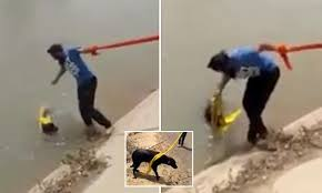 A Sikh man identified as Sarwan Singh has made a global splash after removing his turban to save a drowning dog.   Independent, Mirror, Metro, Mashable, Daily Mail have run the video, which has now gone viral, along with his heartwarming story.  Sarwan Singh and his friends spotted a street dog  drowning in a large canal  in an unidentified location in rural Punjab. The canal walls lined with cement were steep and slippery had made it impossible for the dog to climb back, which was drowning from exhaustion.