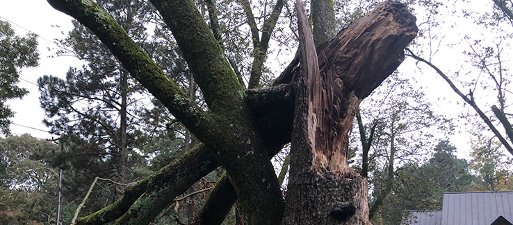 Tree severely damaged after weather event