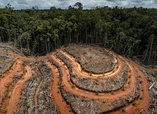 Strategi Nol Emisi Indonesia Adalah Nol Deforestasi