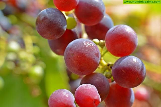 La Escuela de Capacitación Agraria de La Palma oferta un nuevo ciclo formativo de viticultura y elaboración de aceite