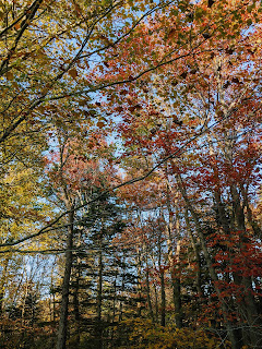 Autumnal Forest, Greenlink Trail, Cape Breton Island