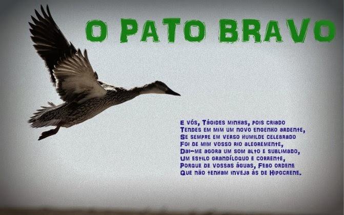 O Pato Bravo