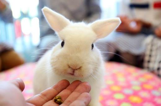 Jak można bawić się z królikiem?