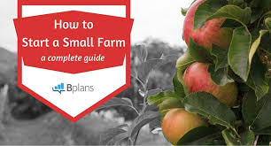 TheOldfarmers talks about how to create successful small businesses