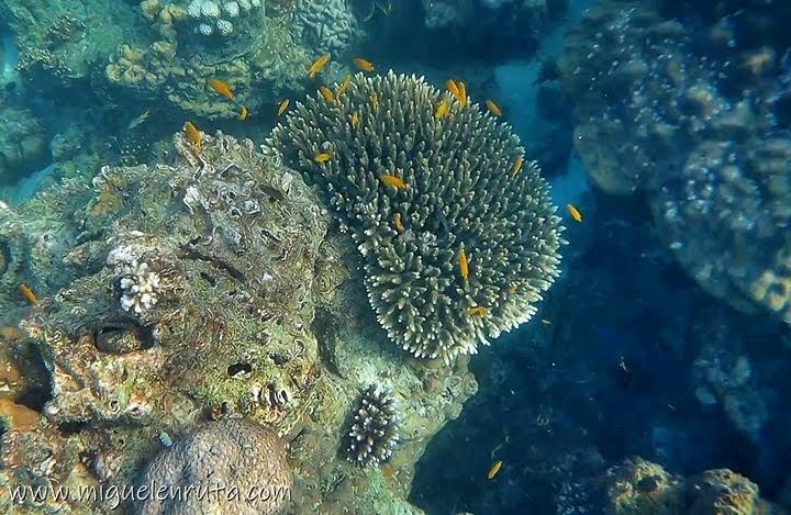 Fauna marina de Shark Point, Phi Phi