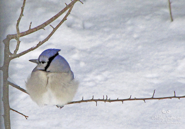 Cute Bird Art Print
