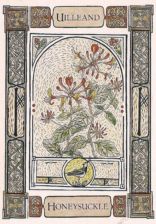 Tarot Notes A Journey Through My Tarot Decks The Magician: Tarot Notes: Week At A Glance: Honeysuckle