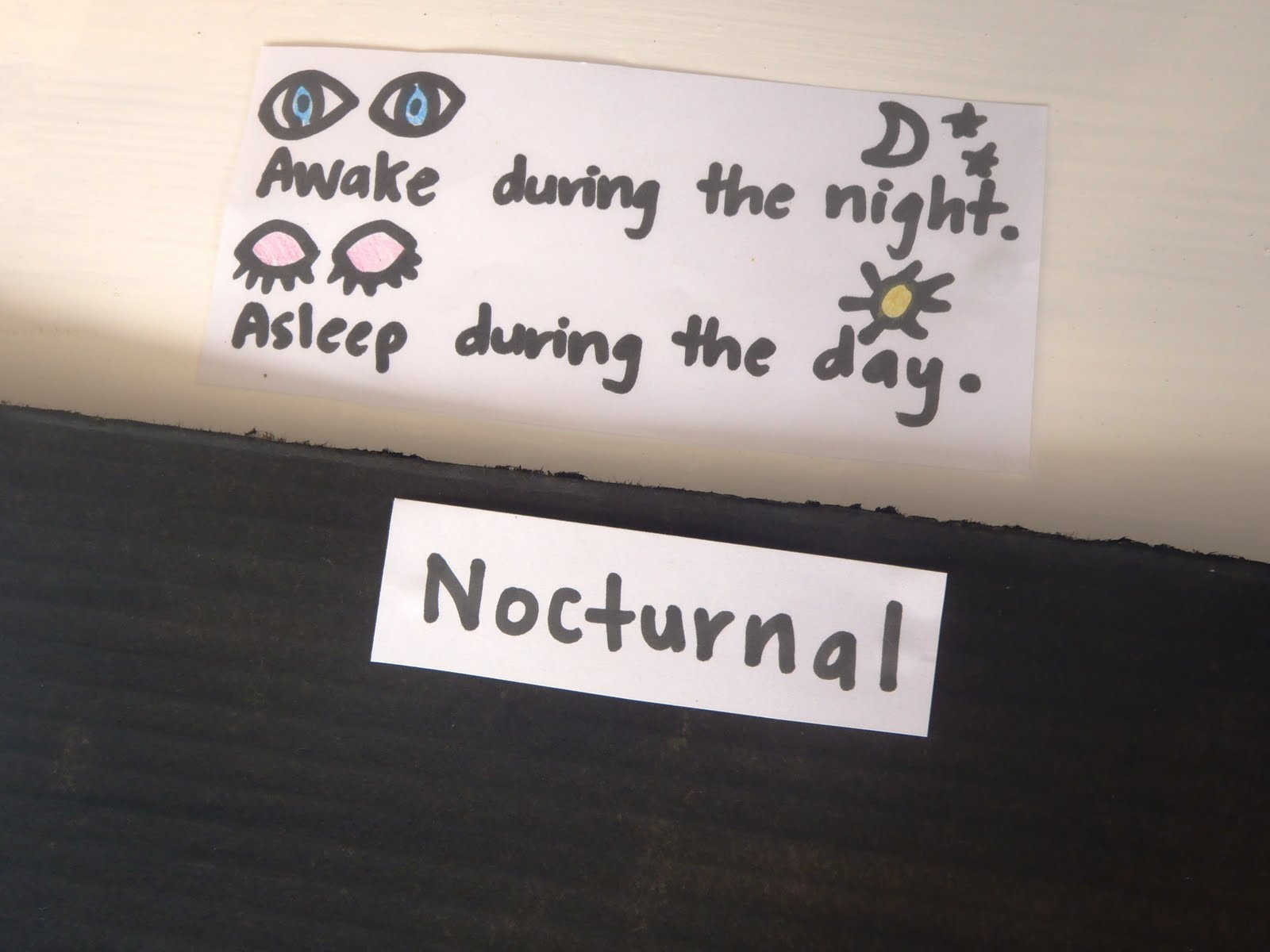 A Little Learning For Two Nocturnal And Diurnal Animals