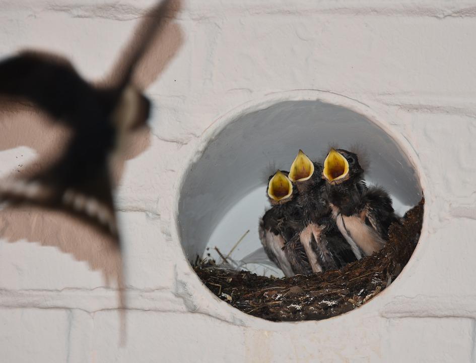 Jenis Makanan Pada Budidaya Burung Walet Dan Cara Memberi Makan